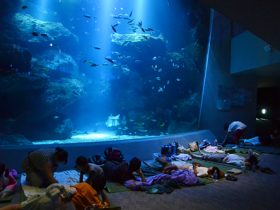 20120804_report_sumida_aquarium_01