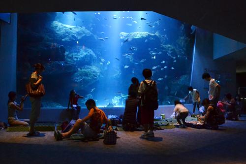 夏休みの特別企画、子供と一緒、親子で夜の水族館で生き物の姿を観察! すみだ水族館「おやこでお泊り水族館」開催!
