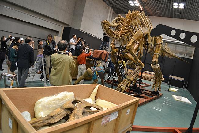 国立科学博物館、7000万年前の巨大恐竜「タルボサウルス」「サウロロフス」「オピストコエリカウディア」の組立作業を公開!子どもに見せたい「大恐竜展」恐竜3体の全身骨格が完成!