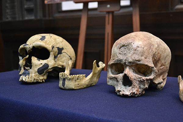 会場に展示されていたネアンデルタール人(写真左)とクロマニョン人(写真右)の頭骨のレプリカ。クロマニョン人は、私たちと同じホモ・サピエンス(新人)で、DNAの研究でも共通性が確かめられた