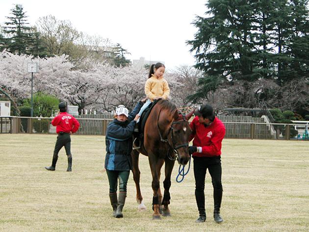 馬事公苑で馬に乗ろう!「体験乗馬」と「馬車の試乗」