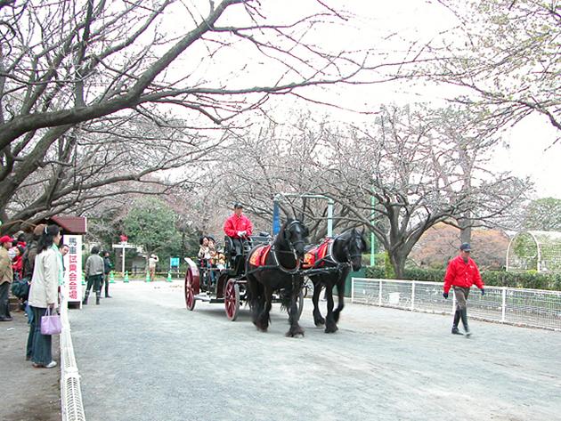馬事公苑で馬に乗ろう!「体験乗馬」や「馬車の試乗」