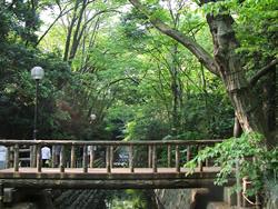 都内に唯一残る、川のせせらぎと野鳥のさえずりが楽しめる「等々力渓谷」