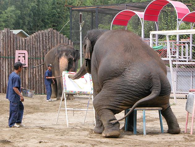 ぞうに乗ろう! 遊ぼう!ぞうの動物園「市原ぞうの国」にお出かけ!