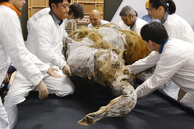 20130709_report_mammoth_yuka_07