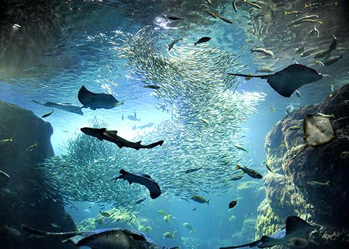 """""""えのすい""""の愛称で親しまれる""""わくわくドキドキ冒険水族館""""「新江ノ島水族館」"""
