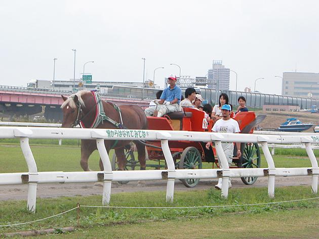 ポニー乗馬や馬車など、気軽に馬と触れ合える! 江戸川区篠崎ポニーランド