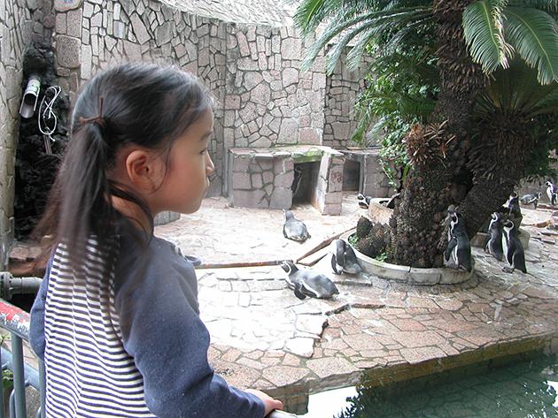 江戸川区自然動物公園の「ふれあいコーナー」でうさぎ、モルモットと触れ合い!