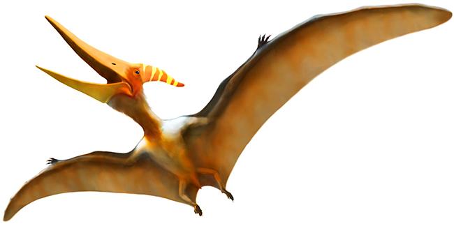 参加者募集中!フジテレビKIDSの「恐竜くんの恐竜学校Vol.1「翼竜徹底解剖!」