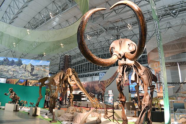 子どもにもわかりやすい恐竜骨格展示で大好評!『メガ恐竜展2015 -巨大化の謎にせまる-』に行ってきた!