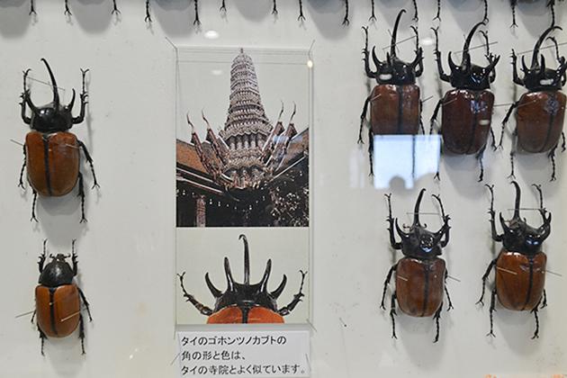 カブトムシ好き子供たち必見!哀川翔流ギネス級カブトムシの育て方も!「大昆虫展 in 東京スカイツリータウン」に行ってきた!