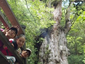 20140821_report_yakushima_00