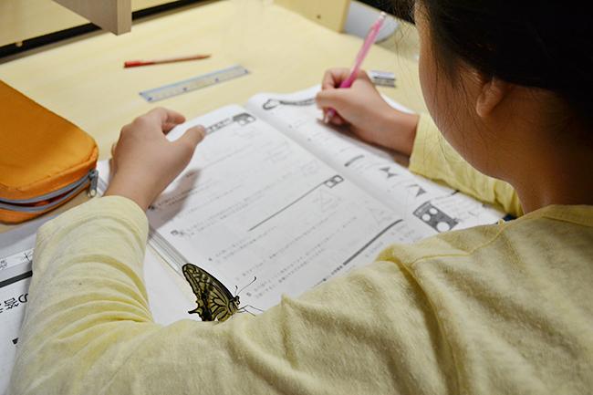 子供でも簡単、手軽で世話いらずでも大きな変化が自由研究にぴったり!アゲハチョウ(ナミアゲハ)の幼虫の飼育と羽化