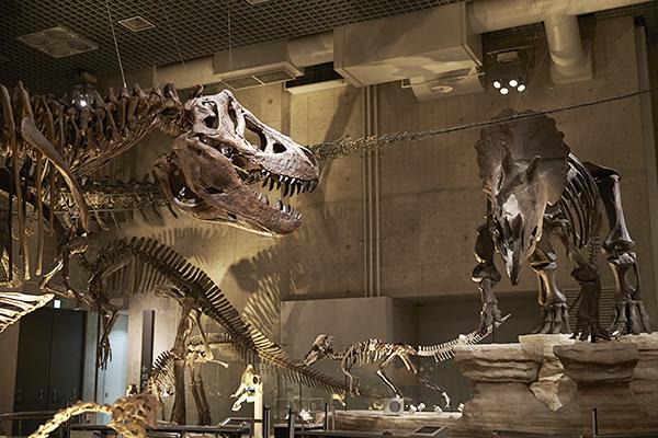 子供が大好きな恐竜の化石を手軽に見られる!最新の恐竜研究の成果も展示!国立科学博物館の「地球館」がリニューアルオープン!