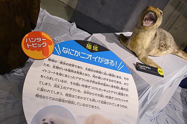 子供たち大興奮!「海のハンター展 〜恵み豊かな地球の未来〜」に行ってきた!