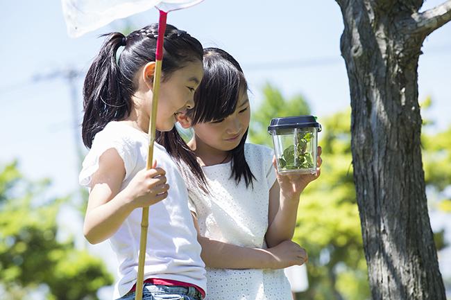 参加者募集中! 子供の自由研究が完成する! 夏休み自然科学体験 移動教室「昆虫博士になれる1泊2日の合宿」