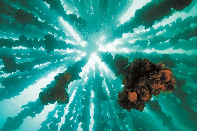 子供の心にも響く!永遠に残したい、豊かな海中の絶景を伝える中村征夫 写真展「永遠の海」
