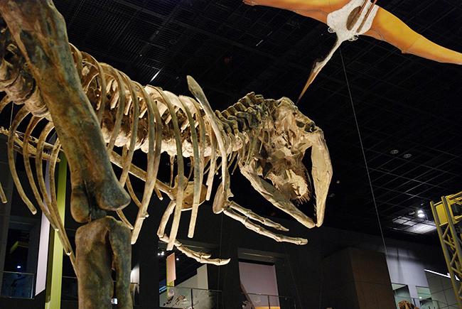 子供たちが大好きな恐竜イベント!2017年11月12日(日)開催!恐竜くんの恐竜学校4「恐竜くんと博物館に行こう!」