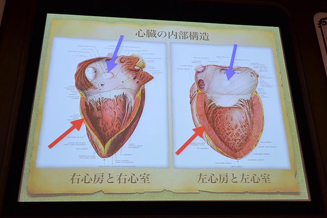 """子供と一緒に私たちの体「人体」について学ぼう!NHKスペシャル「人体〜神秘の巨大ネットワーク〜」と連動、ダ・ヴィンチから最先端技術を駆使して探る """"人体"""" の謎!特別展「人体-神秘への挑戦-」が2018年3月13日(火)〜6月17日(日)まで、国立科学博物館で開催!"""