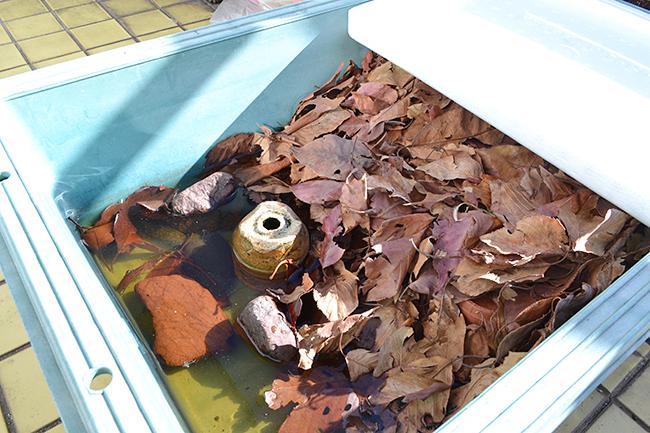 ミドリガメの冬眠、ミドリガメのビオトープと越冬「ミドリガメのビオトープ」