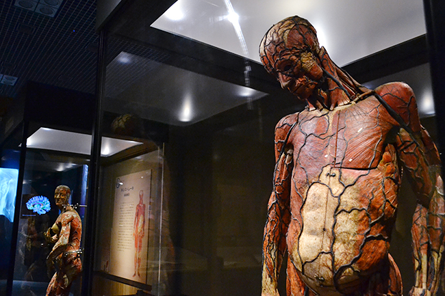 2018年3月13日(火)〜6月17日(日)まで国立科学博物館で開催!特別展「人体ー神秘への挑戦ー」に行ってきた!