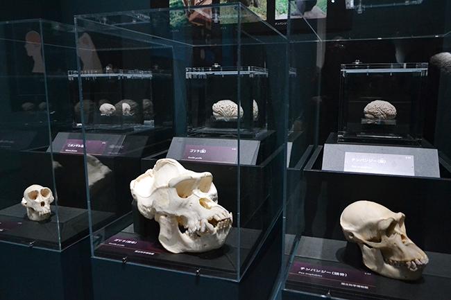 2018年3月13日(火)〜6月17日(日)まで国立科学博物館で開催!特別展「人体ー神秘への挑戦ー」に行ってきた! 子供と一緒に「人体」の謎を楽しもう!