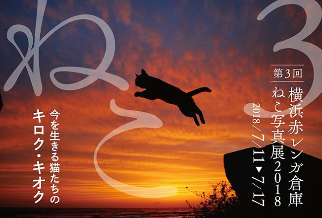 子供も大人も大好きな猫(ねこ)をテーマとした大規模写真展「横浜赤レンガ倉庫ねこ写真展2018」が、2018年7月11日(水)〜7月17日(火)まで、横浜赤レンガ倉庫1号館2階にて開催!