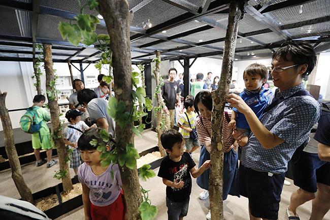 """""""子供たちが大好き!カブトムシと触れ合える毎年恒例の夏イベント「大昆虫展"""