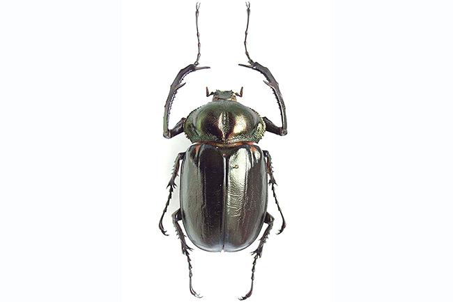 """2018年7月13日(金)から東京・上野の国立科学博物館で初の """"昆虫"""" をテーマとした特別展「昆虫」が開催! 多くの子供たちが楽しみにしている昆虫の大規模展覧会、その監修を務める国立科学博物館の野村周平先生にインタビュー、見どころをお伺いしました!"""