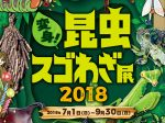 20180701_event_orbi_insects_00