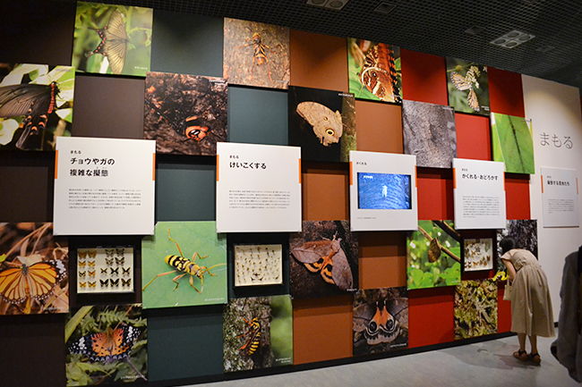 "A large scale exhibition of the National Science Museum's first insect theme, a special exhibition ""insect"" will be held from Friday, July 13, 2018! I went to a special exhibition ""insects""! Recommended insect exhibition that you can understand insect diversity, ability and charm well. This summer vacation, recommended for children as well as insect mania!"