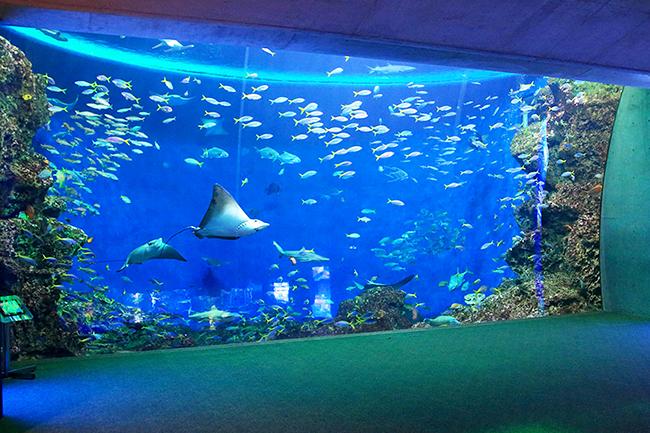 鴨川シーワールドでは2018年7月14日(土)〜8月31日(金)の期間「鴨川シーワールド 2018 年サマーイベント」を開催!夜の水族館イベントや、憧れのトレーナー体験など、子供たちが喜ぶイベントが盛りだくさん!