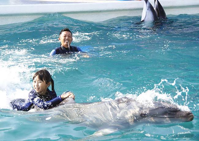 参加者募集中!鴨川シーワールドでは2018年10月6日(土)〜28日(日)の期間中に8日間、小学校5・6年生の子供たちを対象としたイルカトレーナーの職業体験プログラム「ジュニアトレーナー」を開催! イルカの餌やり、体調管理、そしてイルカとのふれあいを体験!