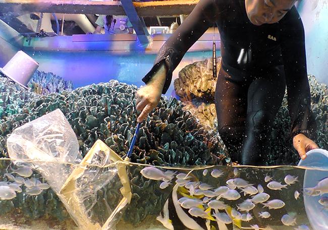 サンシャイン水族館では気持ちよく新年を迎えるため、年の瀬が迫る2019年12月5日(木)・9日(月)に水槽の大掃除「水槽ピカピカ大作戦!」を実施!解説員が水槽前で生物や作業の内容を紹介!