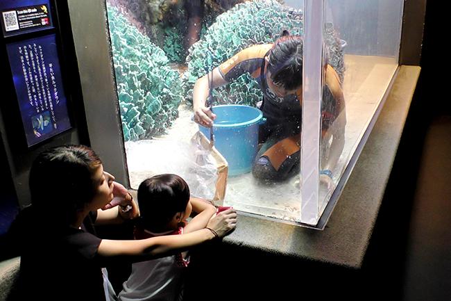 サンシャイン水族館では気持ちよく新年を迎えるため、年の瀬が迫る2018年12月3日(月)・6日(木)・10日(月)・14日(金)・17日(月)に水槽の大掃除「水槽ピカピカ大作戦!」を実施!解説員が水槽前で生物や作業の内容を子供たちにもわかりやすく紹介!