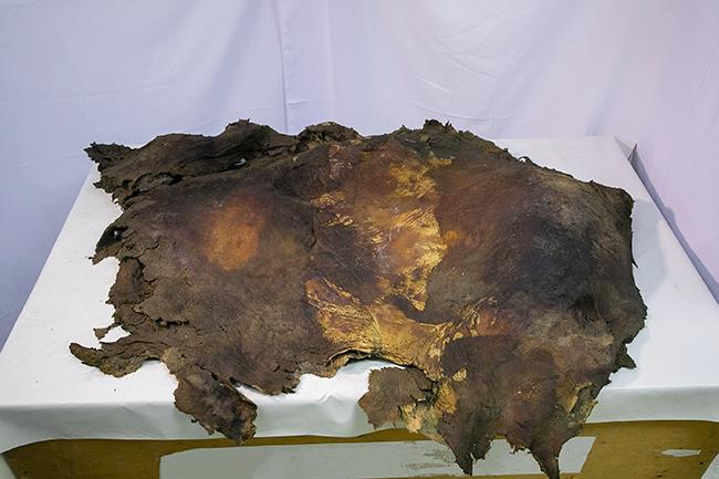 子供達も興味津々! 永久凍土で新しく発掘されたマンモスと数々の古生物の冷凍標本を世界初展示する企画展「マンモス展」が2019年6月7日(金)〜11月4日(月・祝)まで日本科学未来館で開催!子供と一緒に学びたい、絶滅種の復活や古生物を取り巻くの先端の生命科学研究も紹介!「古代仔ウマ」完全体冷凍標本の世界初公開!マツコ・デラックスさんが「マンモス展」のイメージキャラクター!