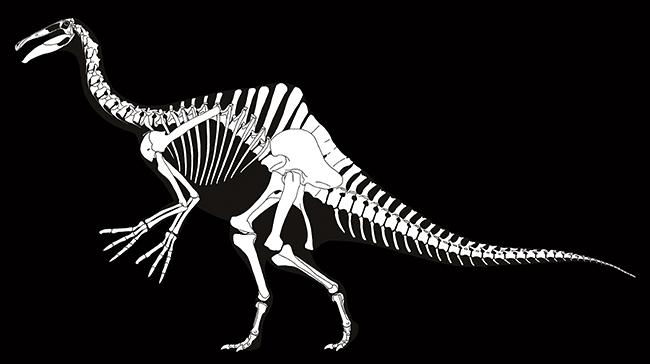 """謎の恐竜 """"デイノケイルス"""" の実物化石と全身復元骨格が世界初公開される特別展「恐竜博2019」が、2019年7月13日(土)〜10月14日(月・祝)まで国立科学博物館で開催!子供たちが大好きな恐竜展。過去50年から現在、近未来の恐竜研究を紹介!"""