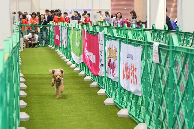 人とペットのより良い暮らしのためのライフスタイルアイテム・サービスを国内外から一堂に集めて提案する「Interpets(インターペット)〜人とペットの豊かな暮らしフェア〜」が、2019年3月28日(木)〜3月31日(日)まで東京ビッグサイトで開催!