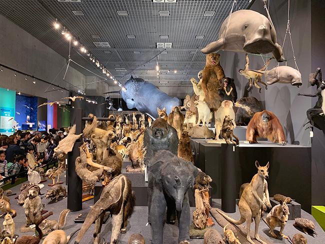 2019年6月16日(日)まで国立科学博物館で開催中の、子供たちが大好きな動物たちがたくさん見られる特別展「大哺乳類展2―みんなの生き残り作戦」に行ってきました! 動物が生き残るために獲得した特徴的な能力と姿形、動きを、500点以上もの剥製や骨格標本、最新映像から紹介!「哺乳類の大行進」は必見!春休みやゴールデンウィーク(GW)に、家族で、じぃじやばぁばと一緒に、大人も子供も楽しめます!