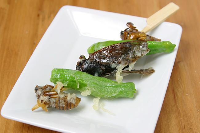 子供たちが大好きな昆虫に、見て触れて知ることができる東京スカイツリータウン夏恒例のイベント「大昆虫展 in 東京スカイツリータウン 〜みんなで応援!昆虫メダリスト〜」が、2019年7月20日(土)〜9月1日(日)に開催!カブトムシとの触れ合いや昆虫食も!夏休みの自由研究にも役立ちます!