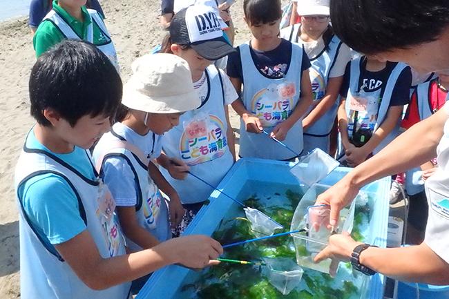 「海」「島」「生きもの」の魅力を楽しめる日本最大級の水族館「横浜・八景島シーパラダイス」では、2019年で5回目となる小学生の子供たちとその保護者を対象とした教育プログラム「シーパラこども海育塾」を、2019年6月より開講します! ただいま、年間10回の体験型授業に参加したい塾生を大募集!