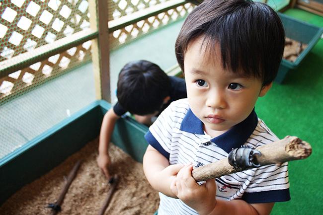 板橋区立熱帯環境植物館で2019年9月1日(日)まで「熱帯の昆虫と食虫植物」を開催!夏休みは小中学生の入館が無料!子供たちが大好きなヘラクレスオオカブトの展示をはじめ、東南アジアのカブトムシやクワガタとの触れあい、日本ではあまり見ることができない昆虫や食虫植物を間近で観察できます。夏休みの自由研究にも!