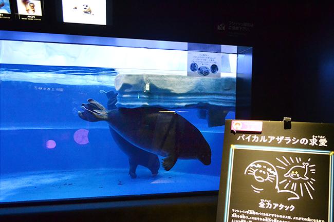 サンシャイン水族館では、海の生き物たちの「性」に関するコンテンツを体験できる夜のサンシャイン水族館「性いっぱい展」を2019年11月4日(月・振休)まで開催!生殖活動や育児の仕方はもちろん、性転換や雌雄同体、オスの出産など、生き物の不思議がいっぱい!