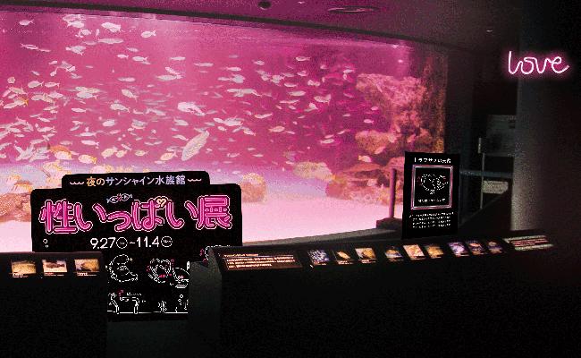 サンシャイン水族館は、普段なかなか見ることのできない海の生き物たちの「性」に関するコンテンツを体験できる、夜のサンシャイン水族館「性いっぱい展」を2019年9月27日(金)~11月4日(月・振休)まで、夜間特別営業(18:30~22:00)として開催!