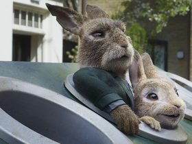 11006693 - Peter Rabbit 2