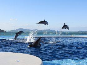 2020_spot_shikoku_aquarium_01