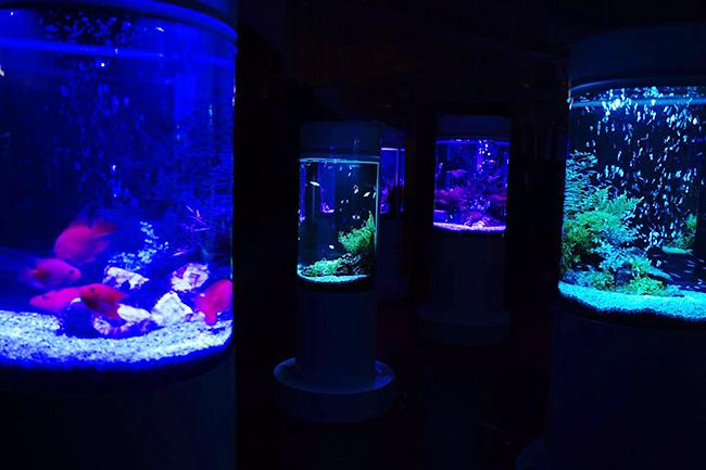 宝石のように美しい2,000匹の世界の魚を展示するカフェ型水族館「ジュエリーアクアリウム」が、2020年6月1日(月)〜8月31日(月)の期間限定で、千葉県木更津市の大型ショッピングモール「イオンモール木更津」にオープン!