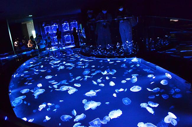 日本最大級となる500匹のクラゲが漂う長径7mの水盤型クラゲ水槽「ビックシャーレ」が登場!通常はバックヤードの飼育作業、繁殖活動、ゴハンの用意も常時公開!2020年7月16日(木)「すみだ水族館」が大規模リニューアルオープン!