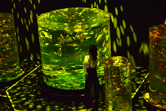 """毎年夏になると日本橋で開催され、艶やかな金魚が美しく舞う、""""涼"""" を感じる空間として愛されてきた「アートアクアリウム」が、2階建ての「アートアクアリウム美術館」として2020年8月28日(金)日本橋にオープン! 前日に開催されたプレス内覧会に行ってきた!"""