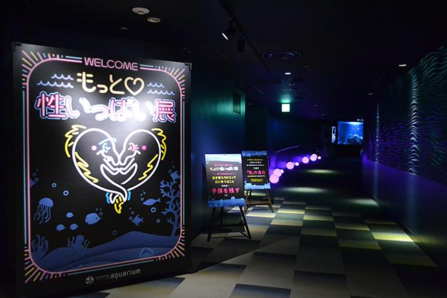 大人気企画第2弾!夜のサンシャイン水族館「もっと♡性いっぱい展」が 2020年11月5日(木)までサンシャイン水族館で開催中!適度な下ネタ、知的好奇心をくすぐられる「性いっぱい展」がパワーアップ、さまざまな生き物の多様な性の世界を紹介!